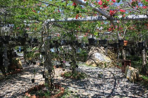 Вьетнам. Вунг Тау. Гора Хо Май. Сад орхидей.
