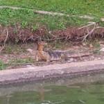 Парк Люмпини в Бангкоке — отдых, спорт, природа!