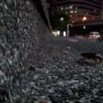 Ночная прогулка рядом с домом (станция BTS National Stadium, MBK)+видео
