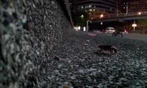 Ночные жуки