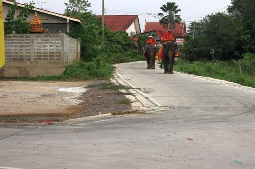 Можно и слона взять для осмотра
