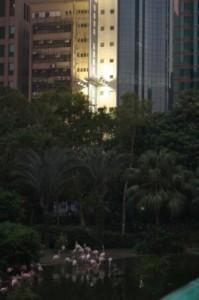 Парк Коулуна и розовые фламинго, Гонконг
